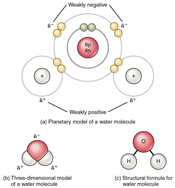 Water — Molecular Structure & Bonding - Expii
