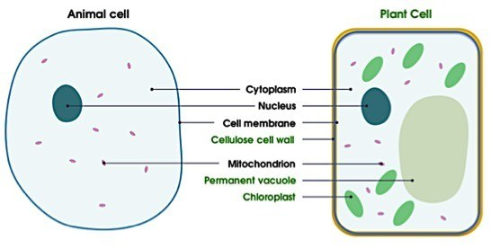 Cell Membrane — Structure & Function - Expii