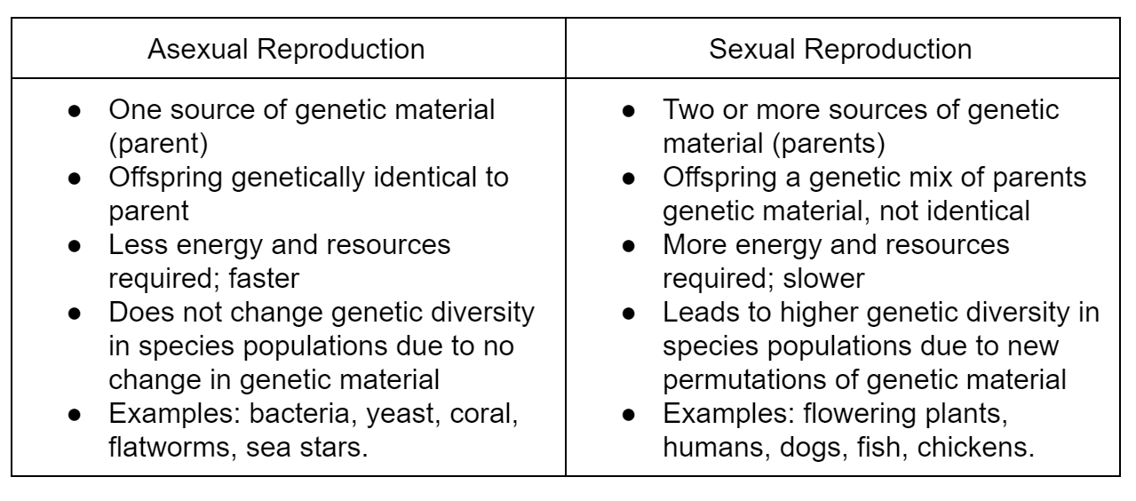 What is asexual reproduction