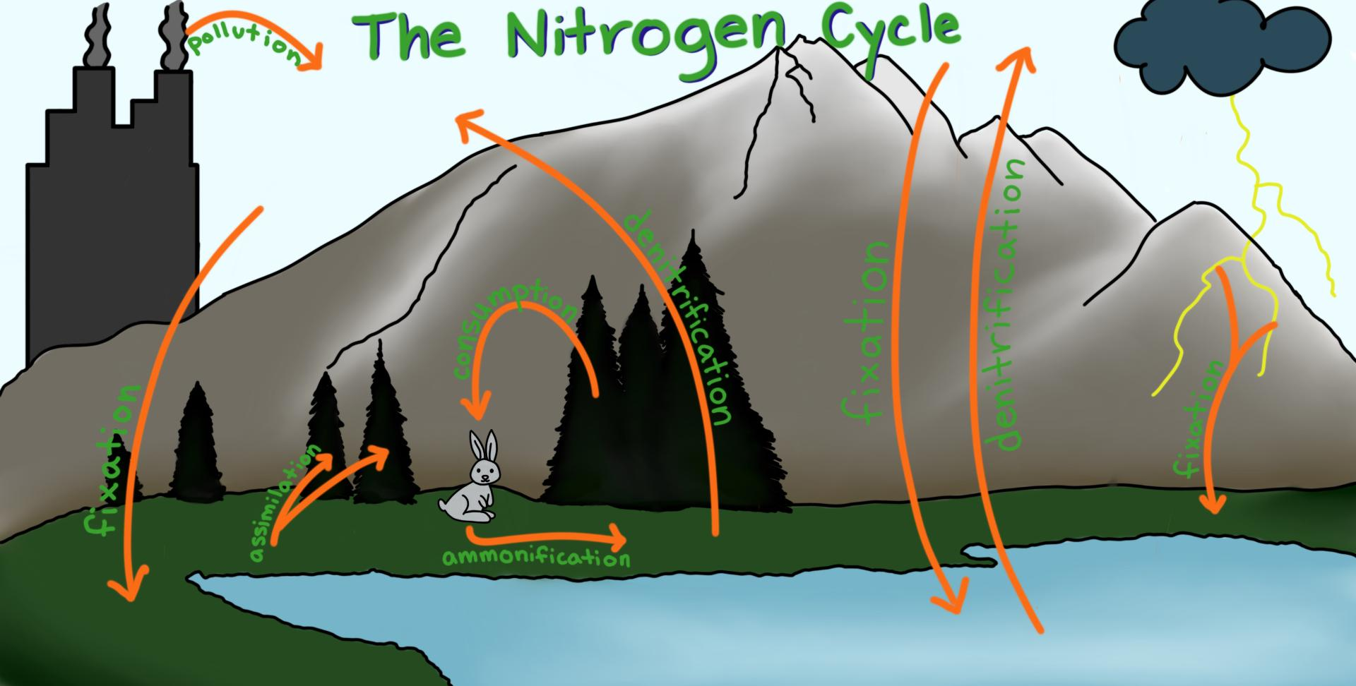 Cycles Matter can cycle through the biosphere because biological...