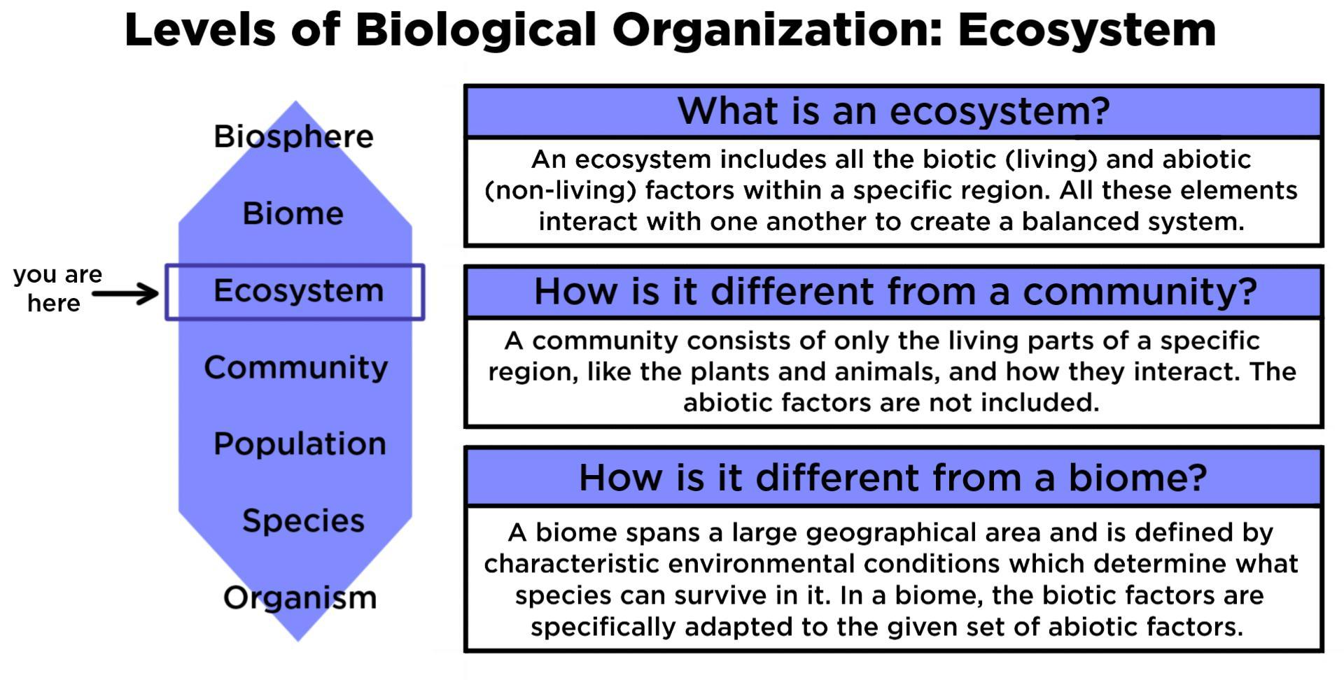 Ecosystem  Ecology   U2014 Definition  U0026 Examples