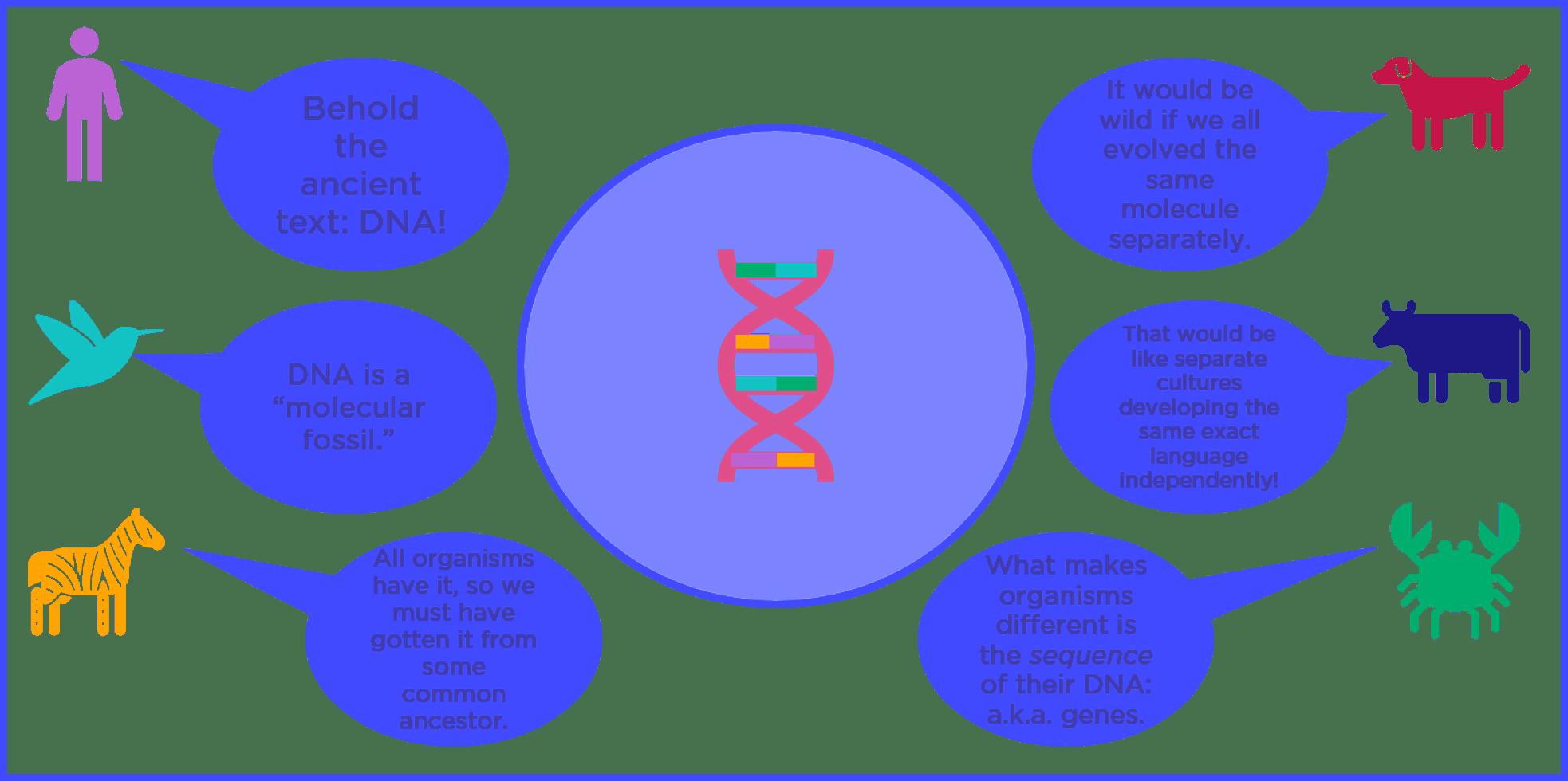 Universal Genetic Code (Evolution) — Evidence & Examples - Expii