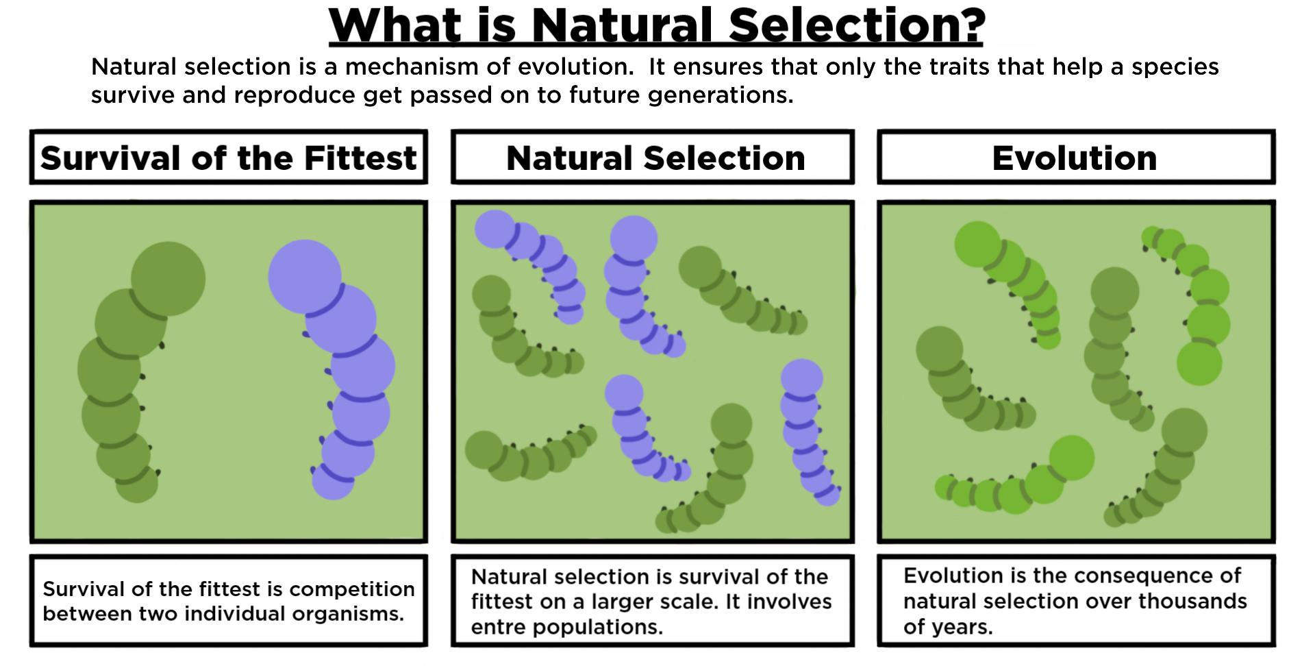 What Is Natural Selection? — Definition & Importance - Expii