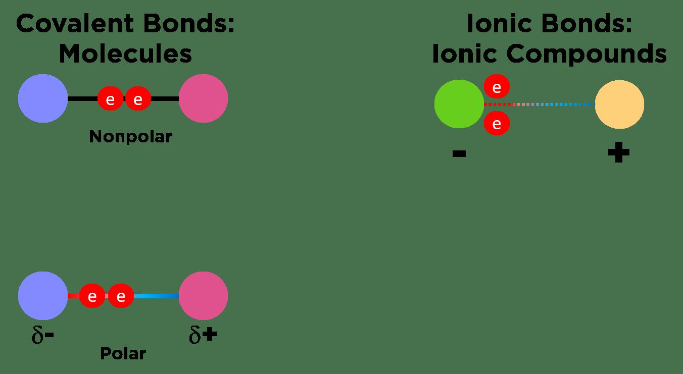 Ionic Bonding Biology — Definition & Role   Expii