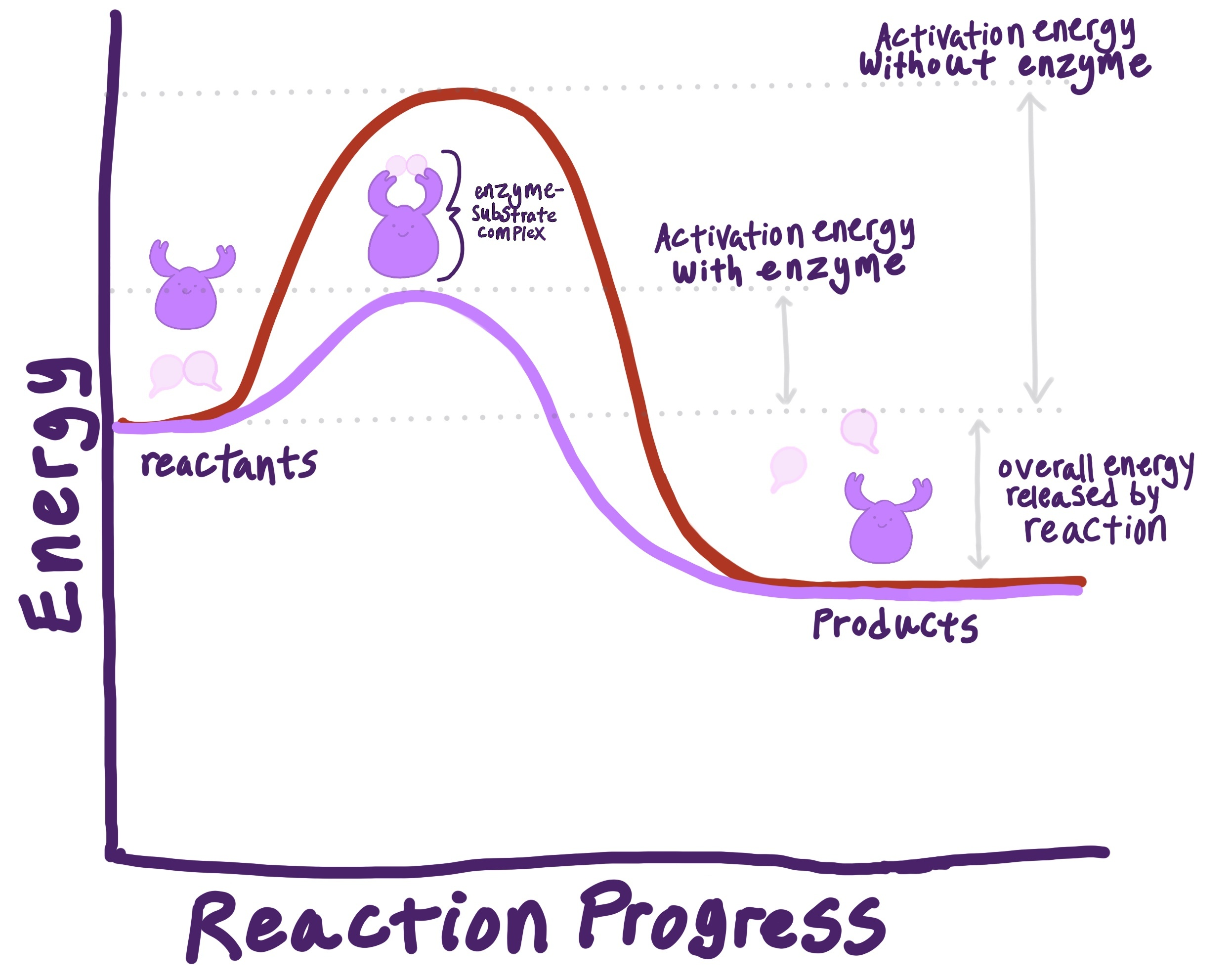 Rate of Reaction (Enzymes) — Role & Importance - ExpiiExpii