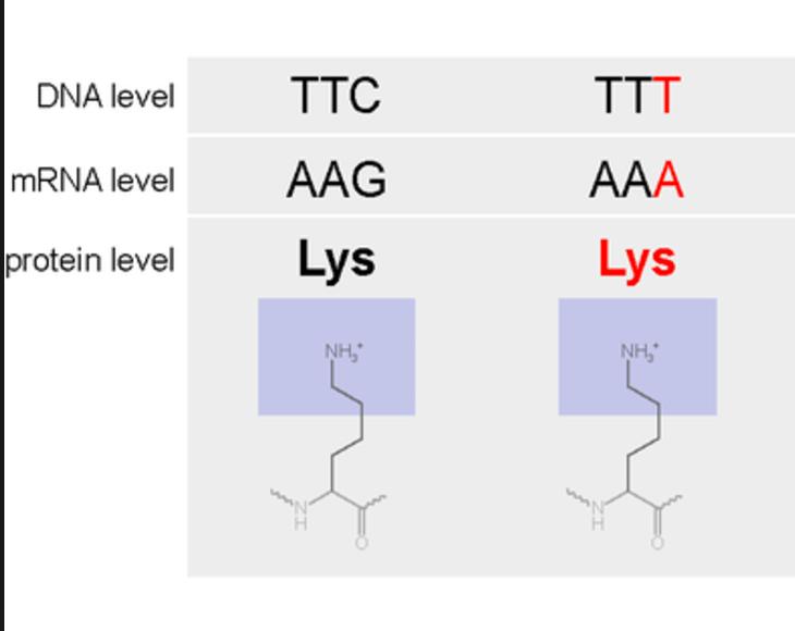 amino acids in dna strands